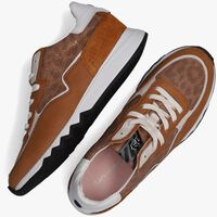 Cognac FLORIS VAN BOMMEL Lage sneakers 85334  - medium