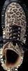 Bruine STUDIO MAISON Veterboots TEENS LEOPARD PATCH BOOTTEE - small