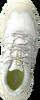TIMBERLAND Baskets basses GARRISON TRAIL LOW en gris  - small