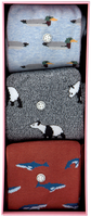 Alfredo Gonzales Chaussettes ANIMALS BOX en multicolore  - medium