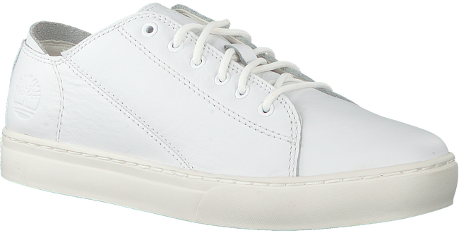 Witte TIMBERLAND Lage sneakers ADV 2.0 CUPSOLE MODERN OX  - large